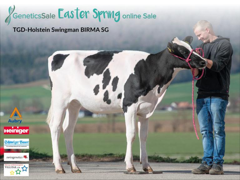 Kat. Nr. 27 TGD-Holstein Swingman BIRMA SG