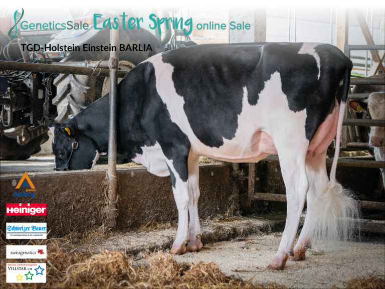 Kat. Nr. 35 TGD-Holstein Einstein BARLIA__Stall